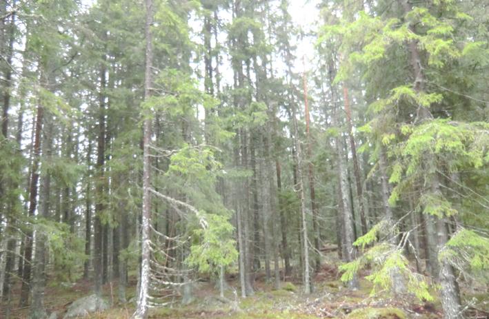 skog till salu småland