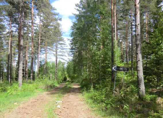 skogsmark till salu
